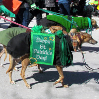 How to survive to a St-Patrick`s parade in the cold